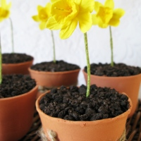 Spring Daffodil Cupcakes - Perfect for Easter