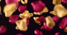 petals_falling_1